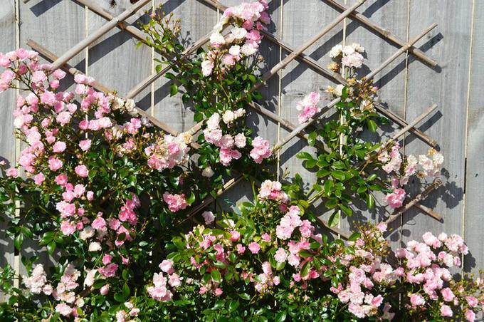 trang trí nhà bằng hoa